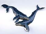 Double Whale Wall Sculpture